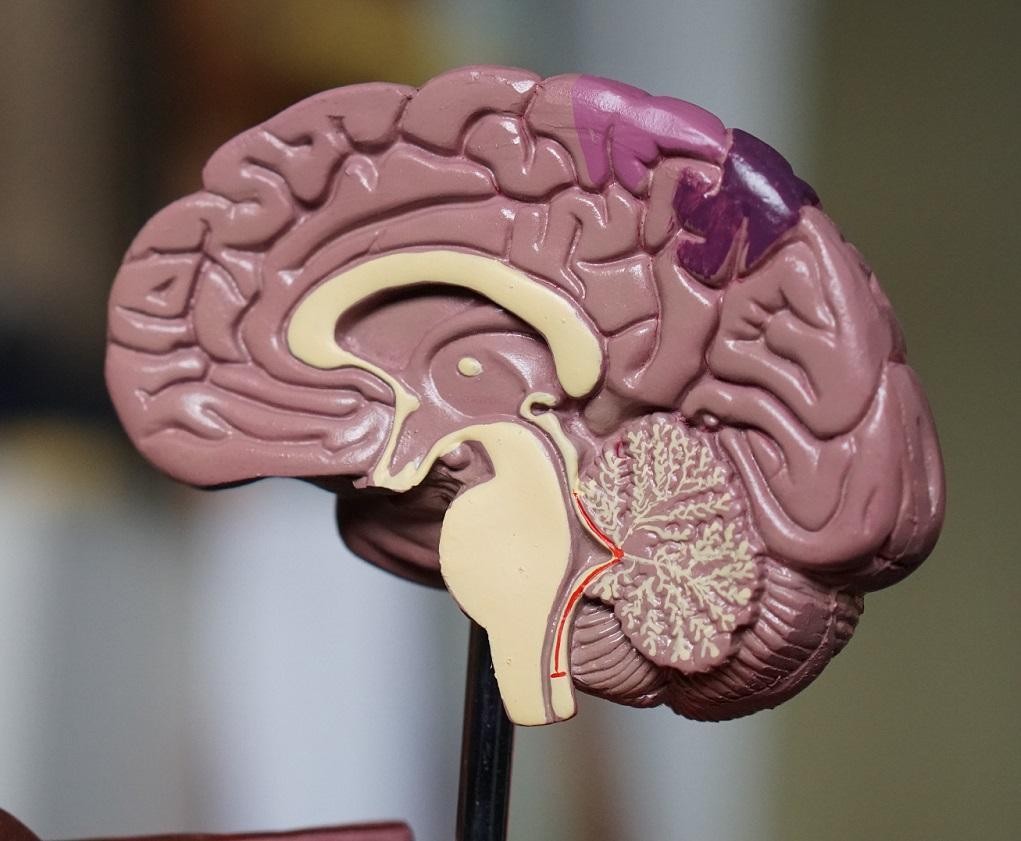 Stressi ja aivot
